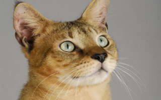 Что значит положение зрачка у кошки