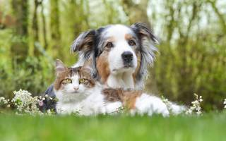 Бессмертна ли душа кошек и собак