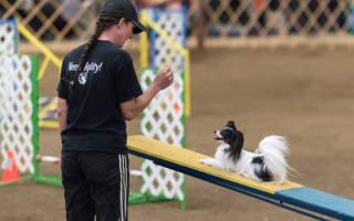 Плюсы аджилити для собак: польза, что это такое, принципы направления