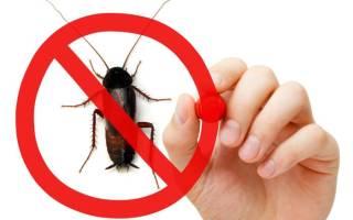 Форсайт (Форссайт) от тараканов (ловушки, жидкость, гели): как выбрать подходящее средство, принцип действия, отзывы