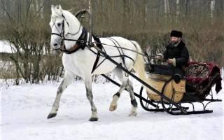 Бега на ипподроме — особенности проведения испытаний лошадей, подборка фото