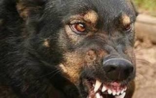 Знаки, по которым можно определить, что собака готовится напасть