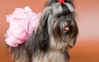 5 российских пород собак, непризнанных в мире
