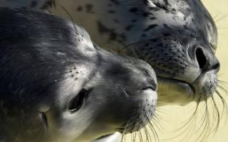 В Новой Зеландии у тюленя нашли флэшку с фото неизвестного путешественника