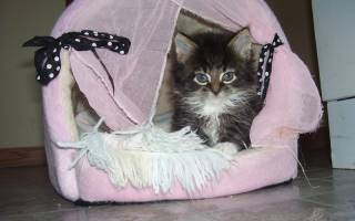Как приучить кошку к домику: практические советы