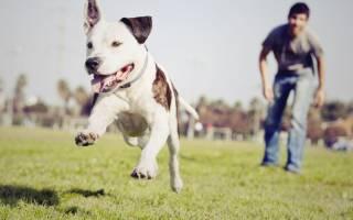 Как сделать так, чтобы собака не потерялась