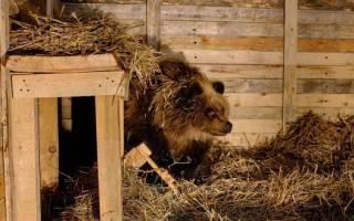 Спасённую волонтёрами медведицу Машу привезли в аэропорт Шереметьево