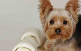 Каким породам собак хорошо жить в квартире