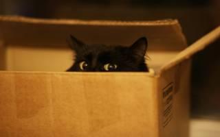 Почему кошкам нравится сидеть в коробках