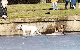 Британка вытащила из ледяного озера тонущего пса и стала героем Интернета