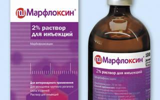 Марфлоксин для собак: таблетки и инъекции, инструкция по применению