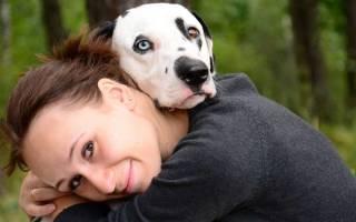 Витамин А для собаки: чтобы реже болела
