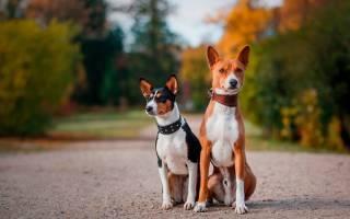 Собаки, которые практически не лают
