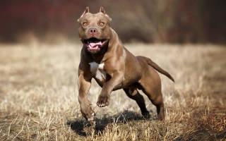 Лучшие сторожевые породы собак