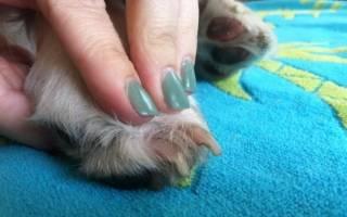 Как подстричь когти собаке в домашних условиях, что делать, если она боится или кусается