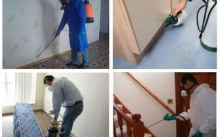 Обработка квартиры от клопов (дезинфекция): как подготовить квартиру, какие методы и препараты обычно используются
