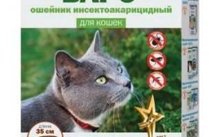 Ошейник от блох и клещей для кошек и котят: какой лучше, виды, обзор популярных брендов, отзывы и рекомендации
