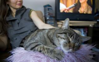 Как кошка подстраивается под настроение хозяина