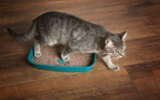 Как отмыть старую грязь с кошачьего лотка подручными средствами