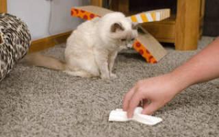 Запах кошачьей мочи: чем можно вывести его с ковра или пола в домашних условиях, как навсегда убрать запах