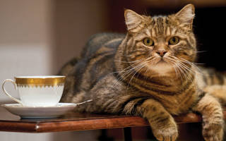 Как отучить кота спать на столе