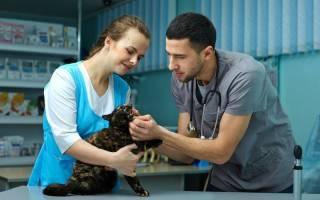 Как выбрать ветеринара: признаки плохого врача