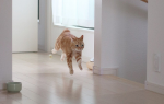 Причины вечерней активности кошки