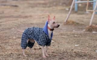 Породы собак, которых не стоит выпускать на мороз без собачьей одежки