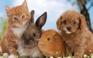 Налог на животных в России 2019: сколько и за что придется платить