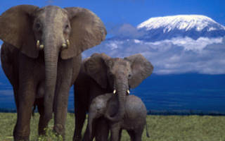 Сколько ходит беременный слон и как происходит вынашивание слоненка