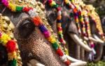 Слониха убила погонщика у храма в Индии