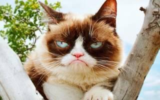 Мур-парад: топ-5 необычных котиков в Инстаграм