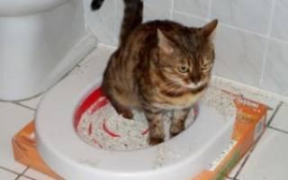 Глисты у кошек: признаки и симптомы паразитов, описание лечения, названия и фото глистов