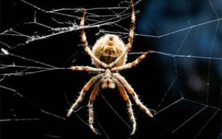 Изучаем пауков: кто такие арахнофилы, сколько лап у паука и какова длина их ножек