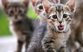 Как фотографировать кошек — советы с фото