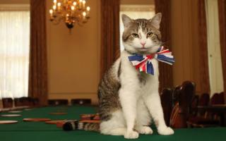 Королевские и президентские питомцы
