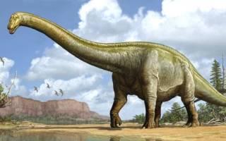 Самые древние существа, дожившие до наших дней