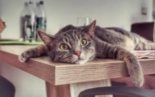 С какими кошачьими привычками хозяину лучше смириться
