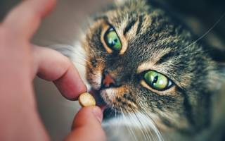Как правильно и безопасно давать кошке лекарство