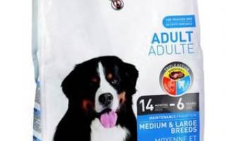 Корма для собак: классификация и рейтинг лучших сухих кормов и консервов супер премиум класса в 2018 году