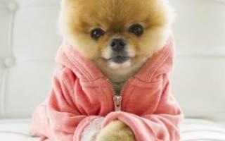 Самые популярные собаки в инстаграме