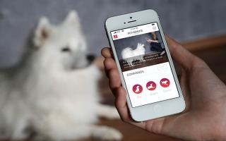 Мобильные приложения, полезные для владельцев собак