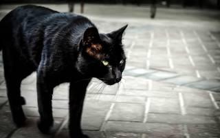 Черная кошка перебежала дорогу — к чему примета