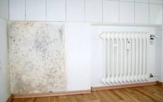 Средства от плесени в квартире: чем обработать стены от грибка, химические и народные методы борьбы
