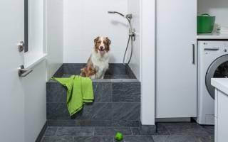 Почему необходимо мыть лапы собакам после прогулки