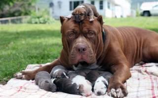 Гордые мамочки и их очаровательные щенки