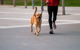 Как развеселить собаку