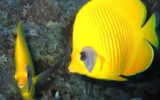 Морские рыбы: название, описание и фото самых популярных разновидностей обитателей морских глубин