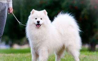 Популярные породы собак, выведенные в России