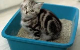 Какой наполнитель для кошачьих туалетов лучше: впитывающий или комкующий, отзывы покупателей